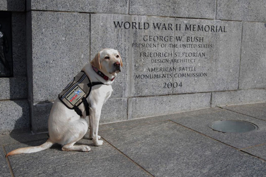 George H. W. Bush's Service Dog Sully Pays Tribute to the Former President on Memorial Day