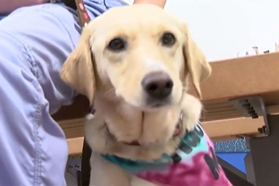 Sasha the Shelter Dog Has Beaten Cancer Now She Just Needs a Home