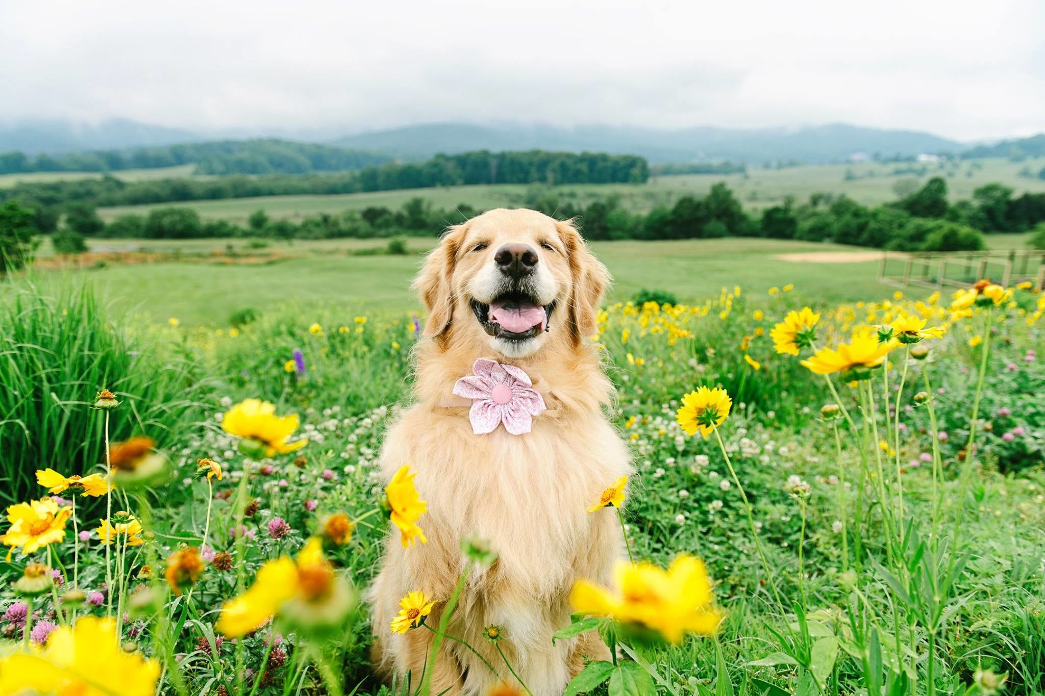 Charlottesville Photographer and Her Insta-Famous Pups Bring Smiles with Community Therapy Session