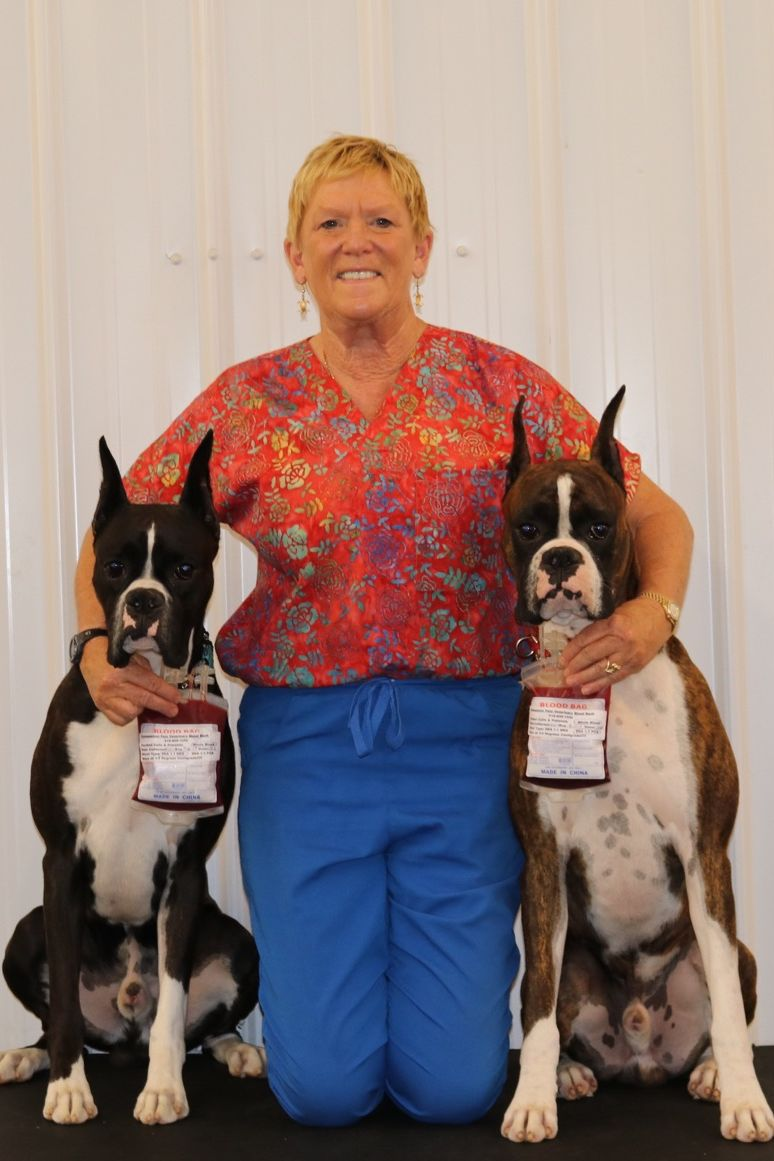 Meet The Woman Behind Oklahoma's Only Blood Bank for Dogs